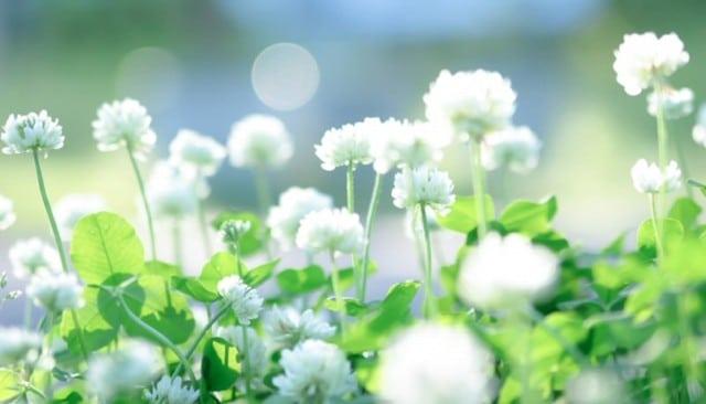 終活 植物